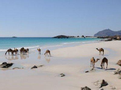 Tour OMAN Salalah: L'Eden D'Arabia   Arché Travel