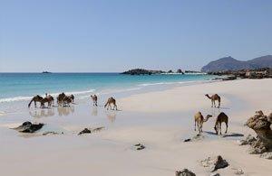 Tour OMAN Salalah: L'Eden D'Arabia | Arché Travel
