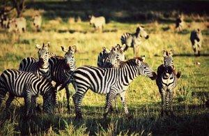 Tour Foto Safari Tanzania Africa parchi del nord - Arché Travel
