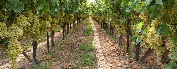 Wine Tour Grecia Classica - Le Vie del Gusto - Arché Travel - Tour Operator