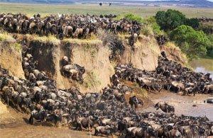 Tour: Foto Safari Kenya Adventure | Arché Travel