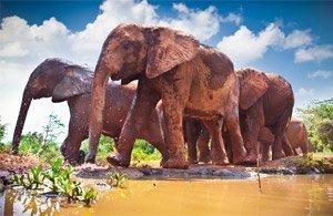 Tour: Foto Safari Kenya | Arché Travel