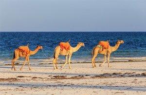 Tour: Foto Safari Kenya e Ocenao Indiano | Arché Travel