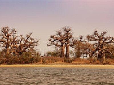 Tour Senegal: Alla Scoperta dell'Africa Occidentale | Arché Travel