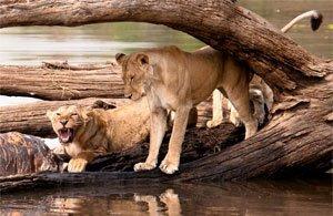 Tour: Safari Tanzania, Selous e Ruaha Safari | Arché Travel