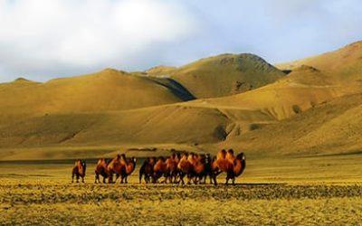 via della seta storia - via della seta uzebekistan