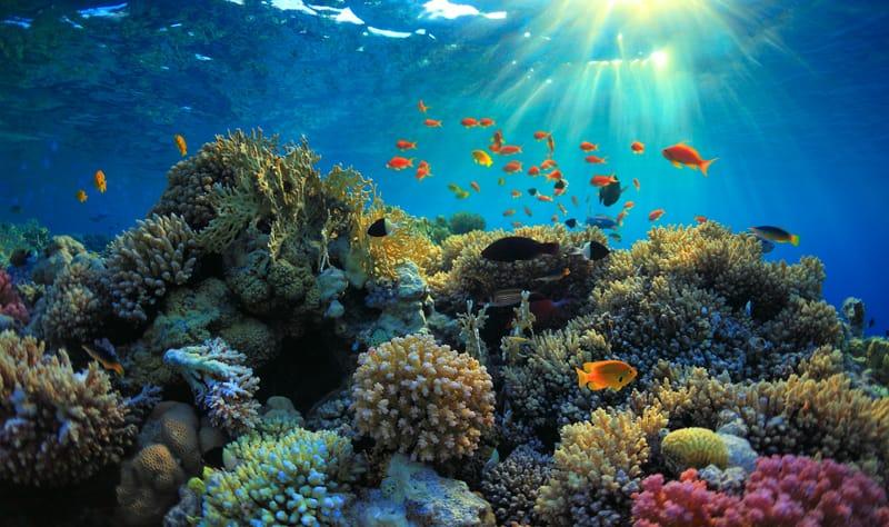 Cosa fare in Arabia Saudita cosa visitare - Mar Rosso snorkeling