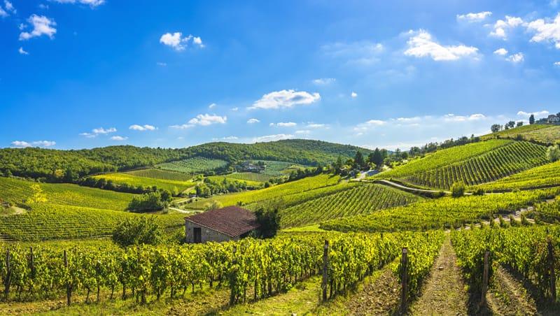 Cosa fare in Toscana - Wine Tasting Chianti