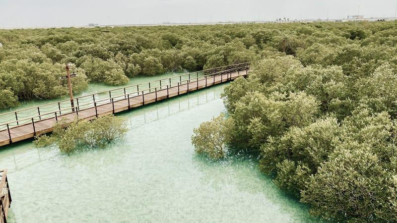 Abu Dhabi visitare mangrove national park