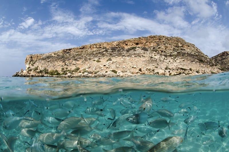 lampedusa cosa vedere area marina protetta di lampedusa cosa fare