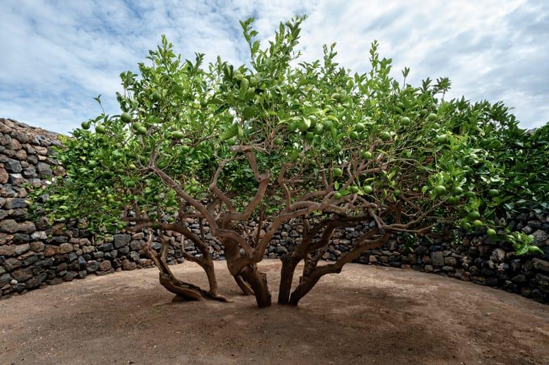 pantelleria cosa visitare giardino pantesco