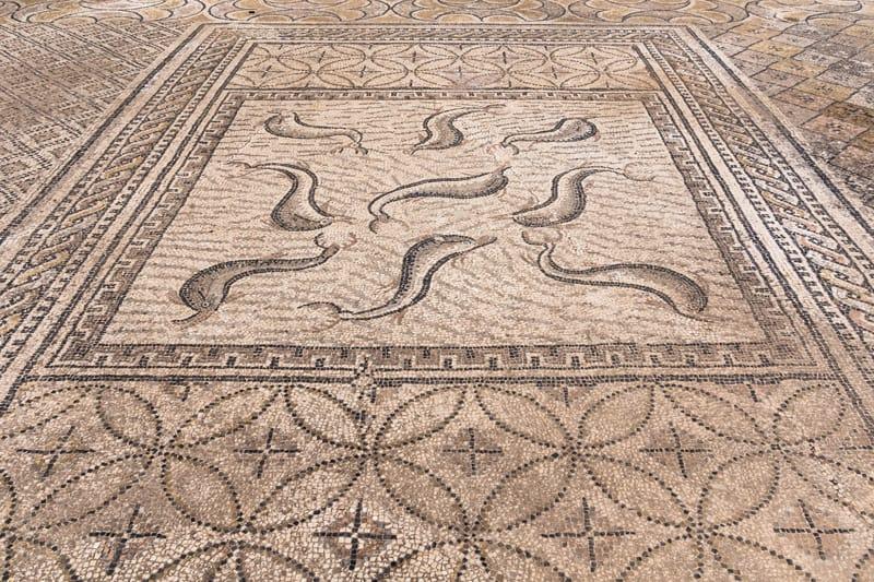 mosaici casa di orfeo delfini volubilis sito archeoligico marocco