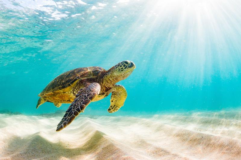 centro recupero tartarughe